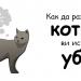 Как да разберете, ако котката ви иска да ви убие