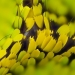 Биохимик заснема удивителни фотографии на криле на пеперуди