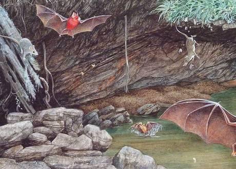 bats-bats-big-as-blooming-c[1]