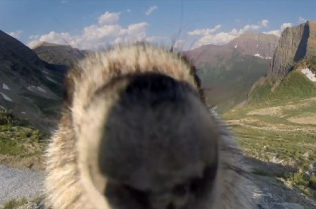 marmot greenpeace