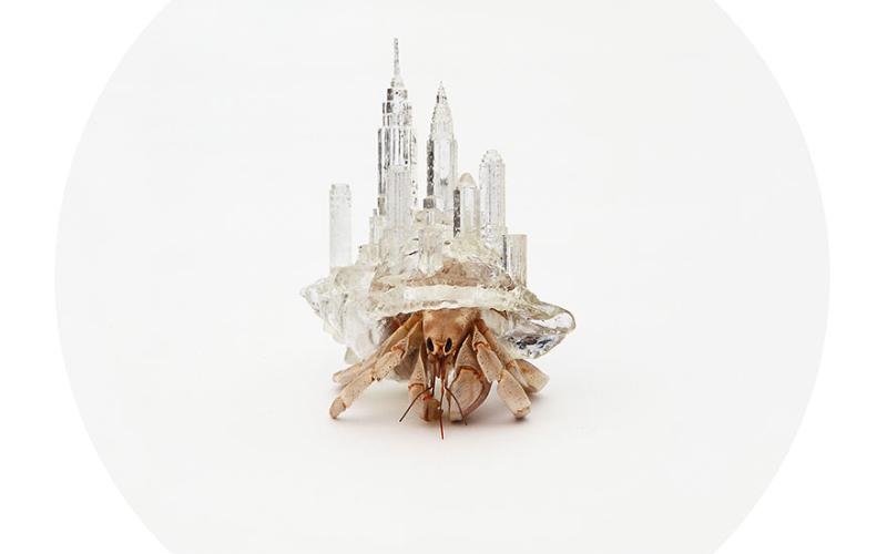 Артист създава мини 3D-принтирани копия на градове под формата на черупки за раци отшелници