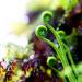 Растенията, които практикуват генно инженерство