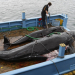 Избили сме почти 3 милиона кита през изминалия век (инфографика)