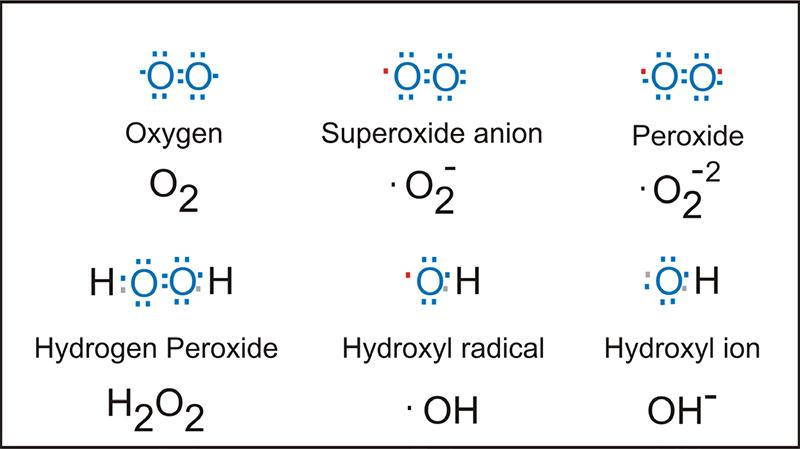 Митът за антиоксидантните свойства и йонизираната (алкална) вода