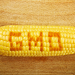 Опасни ли са генетично модифицираните земеделски култури за околната среда?