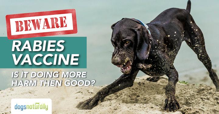 Бесът е безобиден за кученцата. Не вярвайте на ветеринарите!