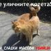 Защо трябва да сме благодарни на уличните котенца?