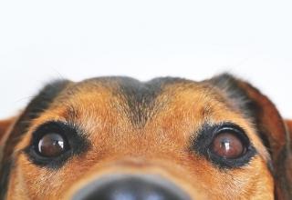 Ако имате куче вкъщи, ще се радвате на понижен риск от заболявания на сърдечносъдовaта система и смърт