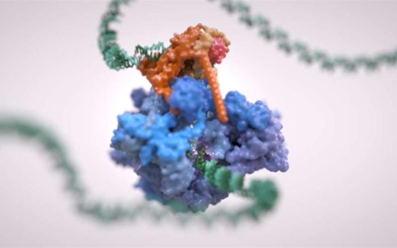 Уникално изображение на ДНК, която бива прочитана (транскрипция – видео)